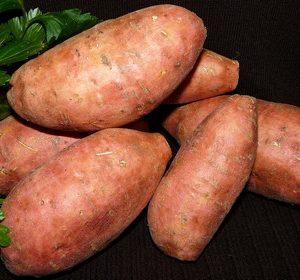 Comment cultiver la patate douce