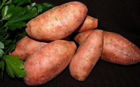 Comment cultiver de la patate douce ?